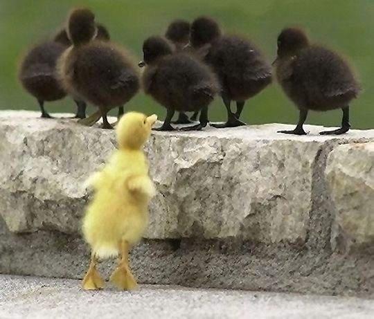 belonging_ducks excluded