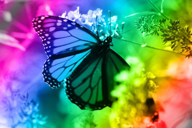 rainbows and butterflies