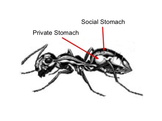 social stomach